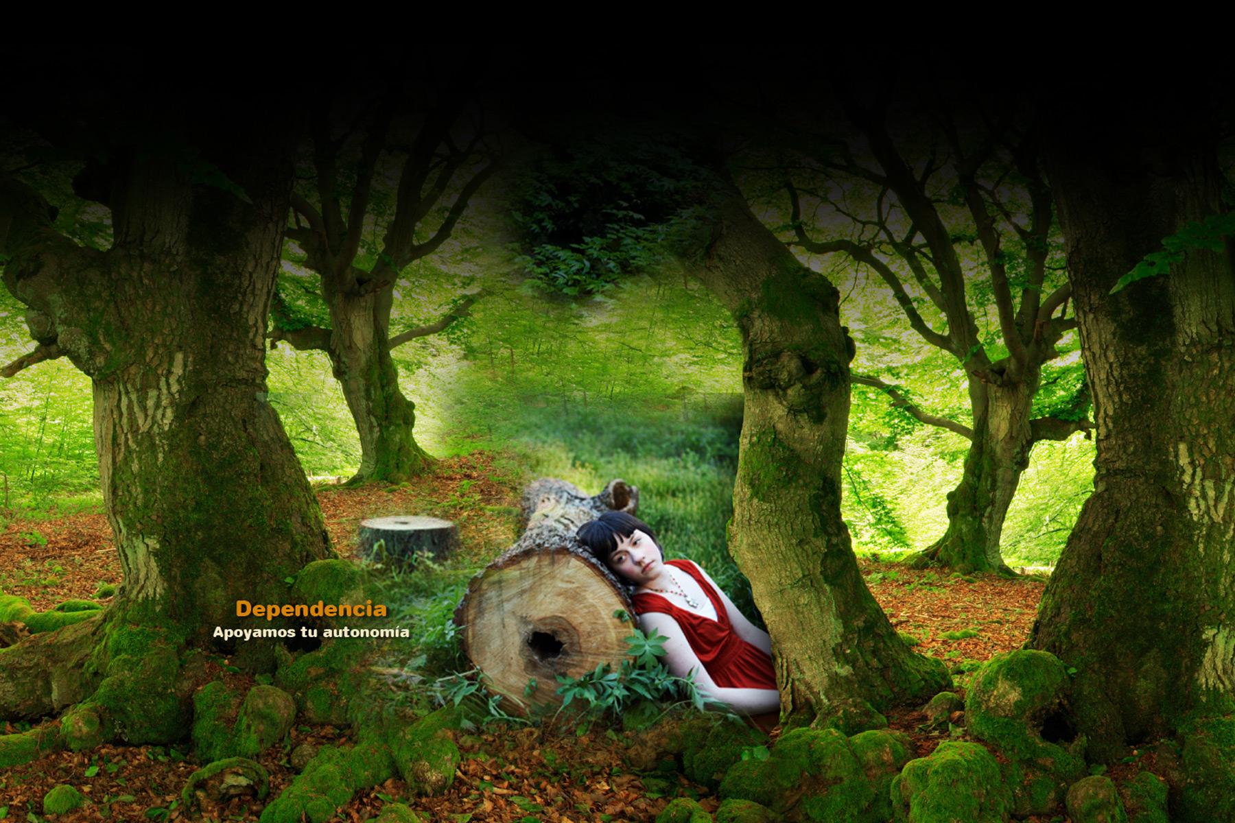 xilema-bosque-3