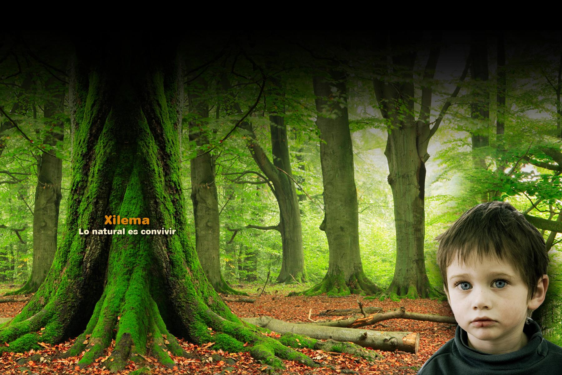 xilema-bosque-1